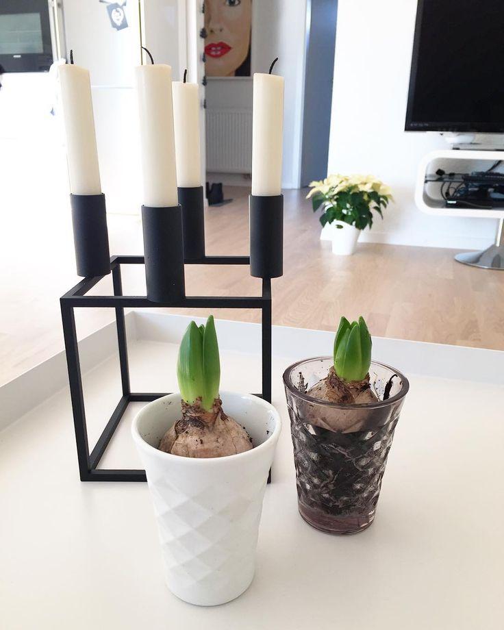 Aktueller Ausblick vom Sofa. Wohnung geputzt. Blümchen umgetopft. Und jetzt warte ich nur noch auf den Wochenendbesuch um ein zweites Frühstück zu essen  #saturday #weekend #hyacinth #tinek #tinekhome #kubusbylassen #kubus4 #interior #home
