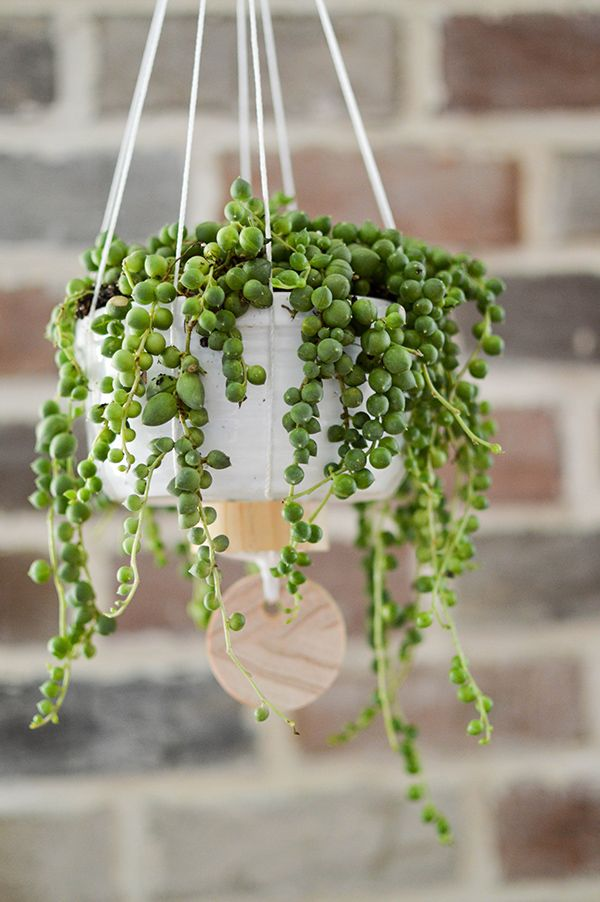DIY Hanging Planter and Three Cleaning Tips