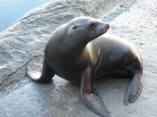 Ocean World Aquarium, Crescent City, CA