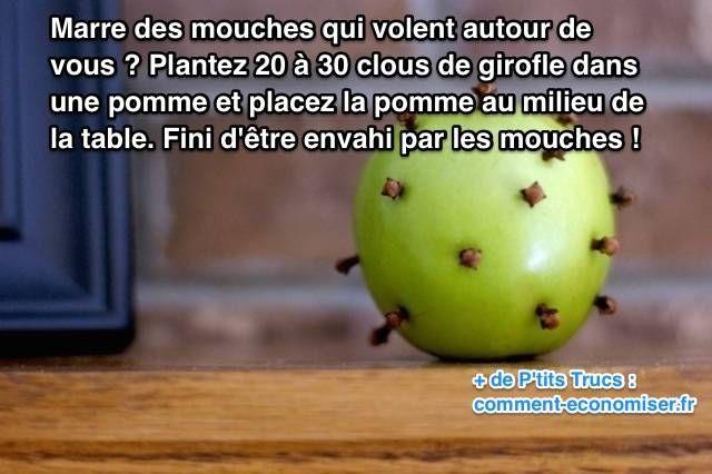 Marre des mouches qui volent autour de vous à la maison ? Découvrez l'astuce ici : http://www.comment-economiser.fr/faire-fuir-mouches-dans-maison.html?utm_content=buffer475ca&utm_medium=social&utm_source=pinterest.com&utm_campaign=buffer