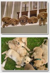 Canadas Canine Academy - Help Thru The Ruff Times