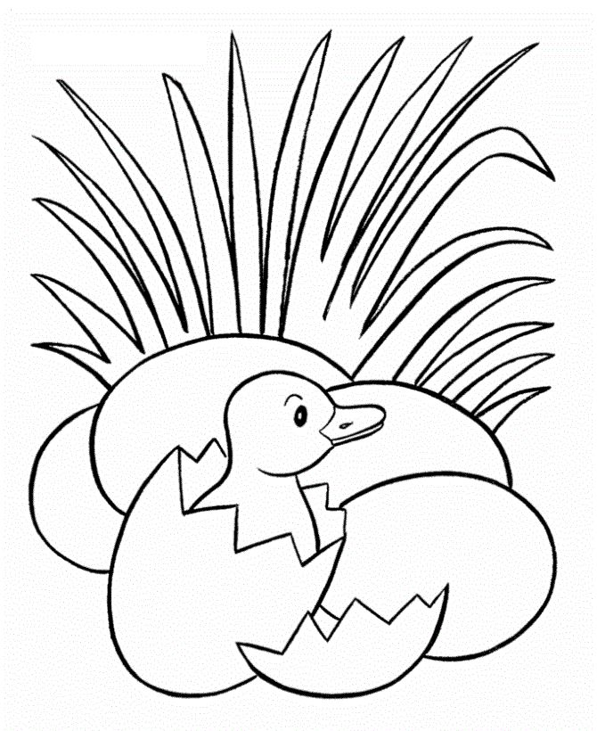new small ducks hatch coloring pages for kids printable ducks coloring pages for kids