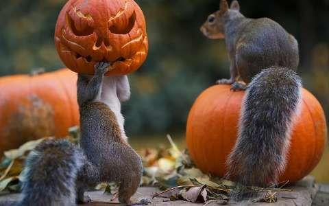 halloween mókus tök