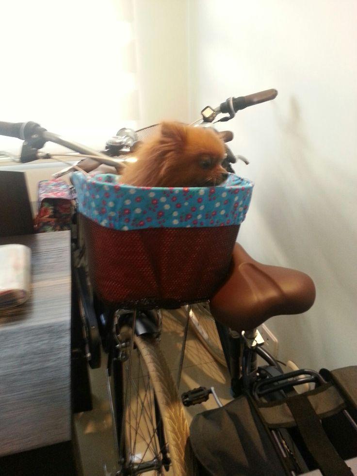 Bolsa para la canata de la bici.