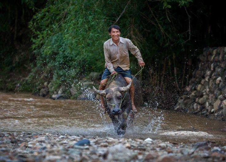 https://flic.kr/p/J6cL1d | Buffalo man Vietnam