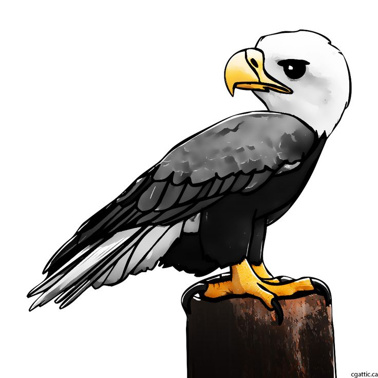 eagle cartoon step 4: use colors and layer styles to make the eagle stand out.