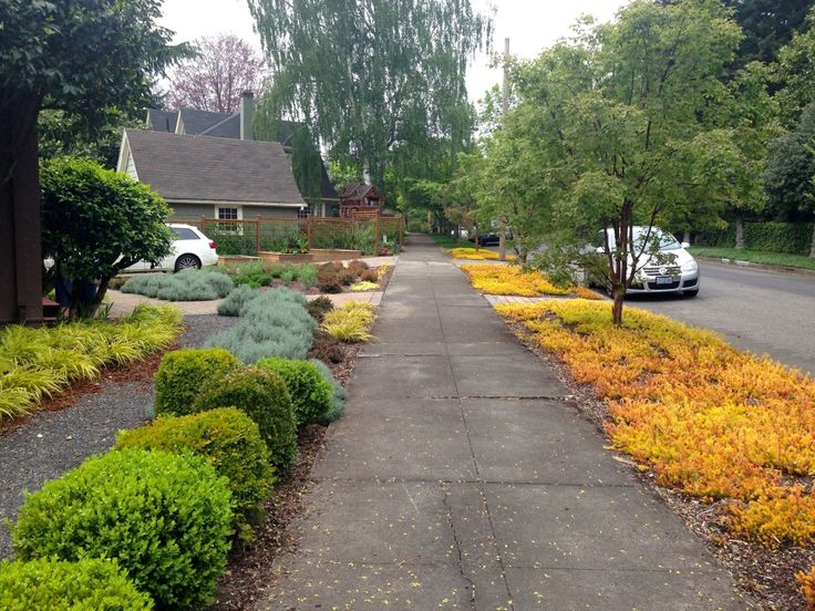 17 best images about low water garden landscaping ideas on for Low water front yard ideas