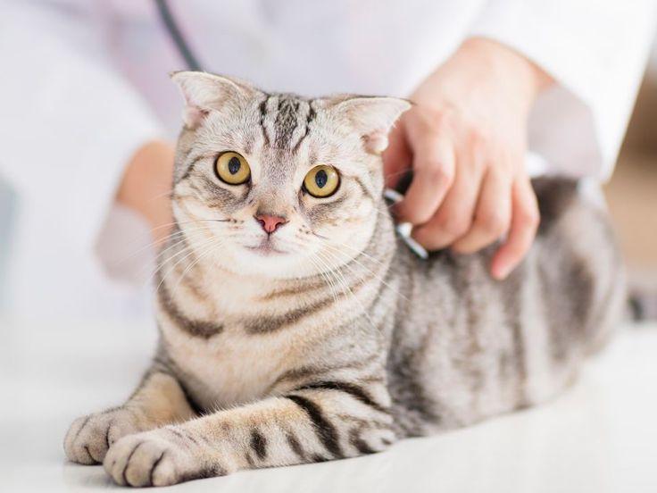 ¿Tienes un gato 'Garfield'?
