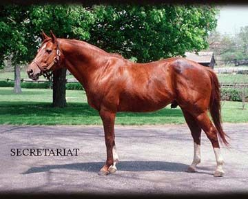 Secretariat considered by many to be the greatest race horse of all time