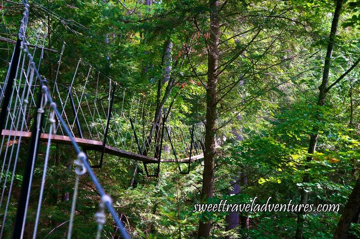 Angled View of Canopy Boardwalk in Haliburton Forest in Haliburton Highlands, Ontario