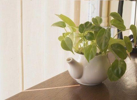 8 Plantas que refrescan tu hogar