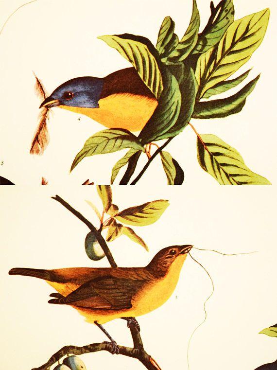 https://www.etsy.com/ca/listing/562306122/painted-finch-print-audubon-folio?ref=shop_home_active_73