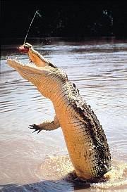 Kakadu National Park is a world heritage listed park.#amusemnet