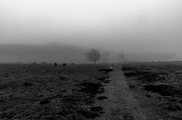 Foggy day - Foggy day in the national park