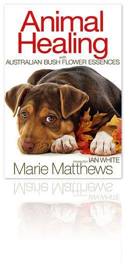 Photo of Animal Healing book