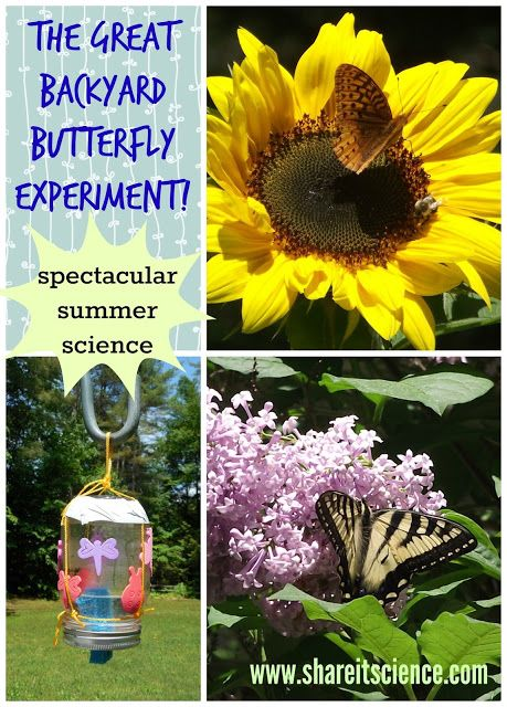 Share it! Science News : The Great Backyard Butterfly Experiment! DIY Butterfly feeders and a free printable.