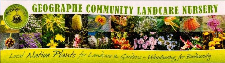 Geographe Community Landcare Nursery - Fantastic Australian Natives!!!