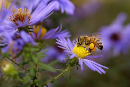 Alternatives to Neonicotinoids Could Be Even Worse for Honey Bees #news #alternativenews