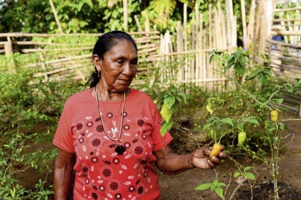 A ideia de reciclar a tradição milenar para transformar as pimentas em pó em uma alternativa para o desenvolvimento sustentável das comunidades, valorizando o trabalho das mulheres, começou a ser discutida em abril de 2005, a partir do I Encontro de Mulheres do Içana, que contou com a participação de técnicos do ISA. E a proposta de comercializá-la no sudeste ganhou fôlego.