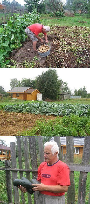 Удивительный огород. | Сад и огород | Постила