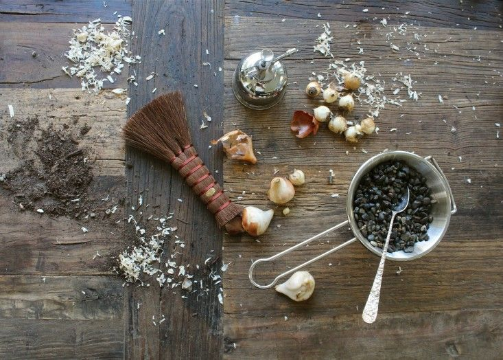 DIY: How to Force Muscari Bulbs - Gardenista