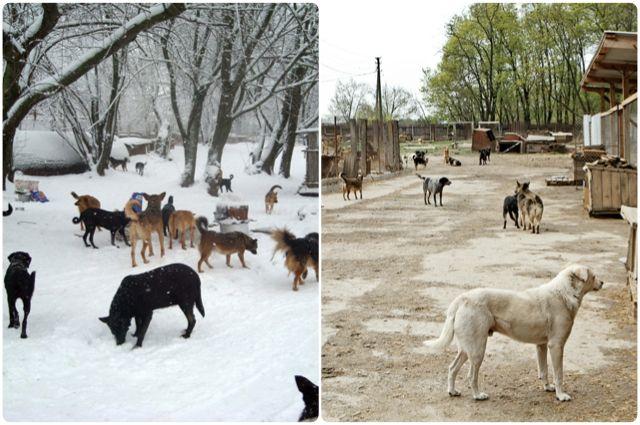 Обзор трех киевских приютов для животных