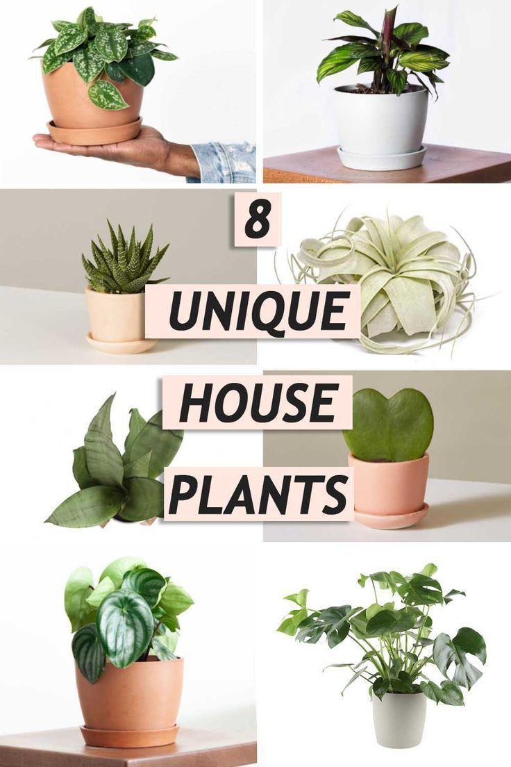 Trend Alert 8 Unique Houseplants We Re Loving In 2020 Plants House Plants Indoor Houseplants