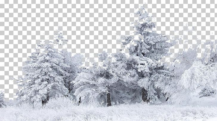 Snow Tree Winter Birch Png 1080p Black And White Bliz Branch Christmas Decoration Snow Tree Snow Art Decoration