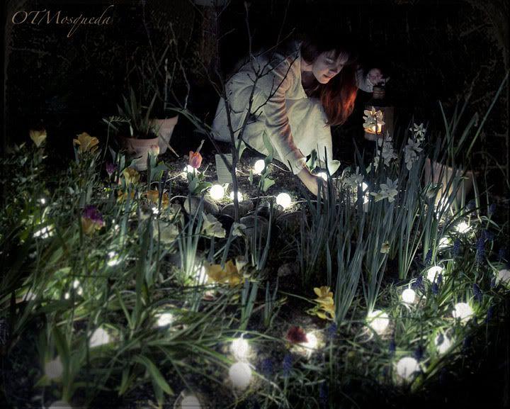 такой собрал лунный цветок фото в саду это
