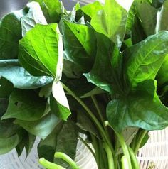 Sweet potato greens:  Did you all know you can EAT sweet potato greens and they are very, very healthy?