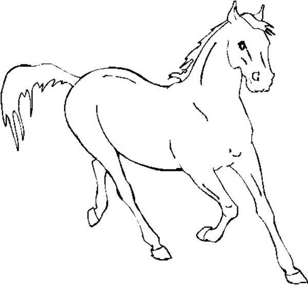 Horse Horse Running Fast In Horses Coloring Page Dengan Gambar