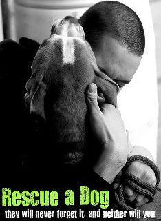 Adopt a dog. Save a life.