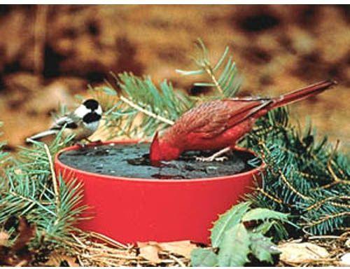 Happy Bird Solar Sipper Heated Bird Bath - Bird Baths at Hayneedle :: doesn't need to be big
