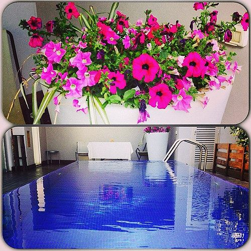 Pool and FLowers #dalmorogallery #hot #pool #restaurant #hotel #spring #sunnyday #flowers #fun