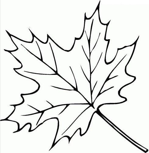 ausmalbilder blätter 07  fall coloring pages leaf