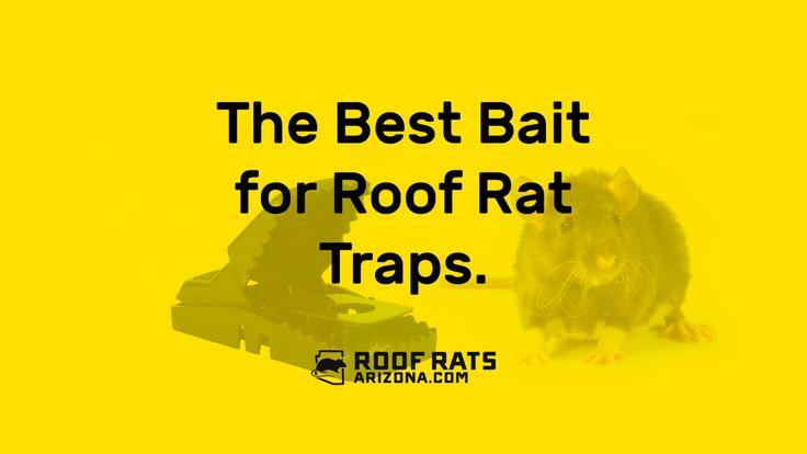 The Best Bait for Roof Rat Traps
