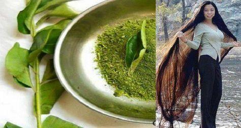 Obtenez long et Strong cheveux en un mois avec un Herb (RECETTES)