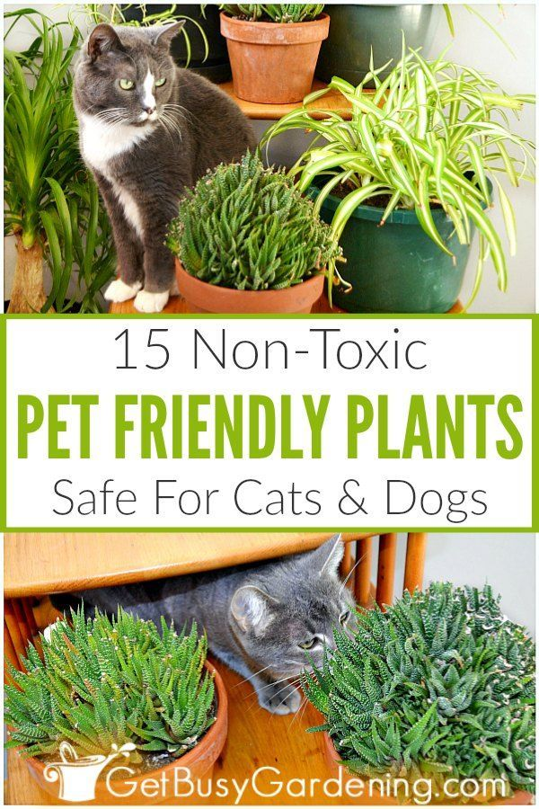 15 Indoor Plants That Are Safe For Cats And Dogs Plants