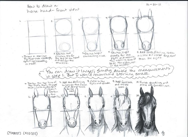 How to draw a horse head front viewDrawing Class, Drawing Horses, Art Photography, Horse Drawing Tutorial, Google Search, Art Instructions, How To Draw, Horses Head Front, Head Front View