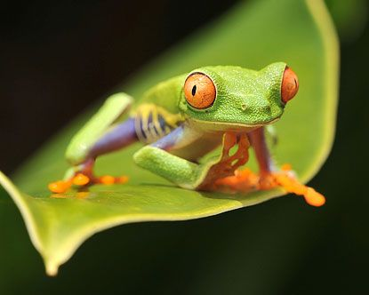Costa Rica Rainforest Animals