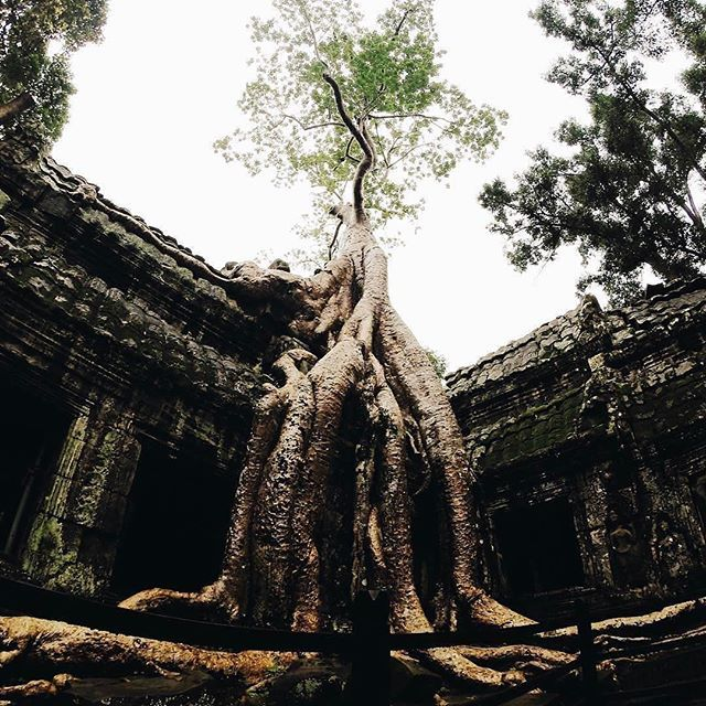 Follow @globefever for more. Ta Prohm, Angkor. Cambodia. Photo by @theawesomekev