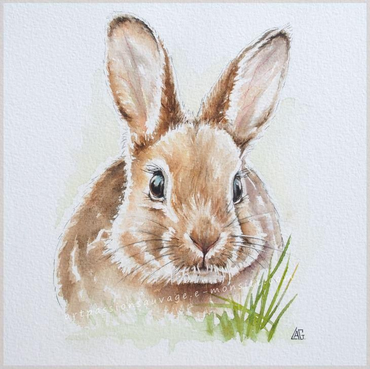 Lapin Aquarelle Bunny Watercolor Rabbit Painting