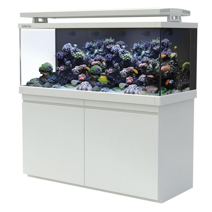 224 best images about aquarium on pinterest red sea. Black Bedroom Furniture Sets. Home Design Ideas
