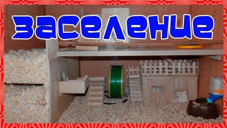 Грандиозный переезд хомяка в новый дом. Дом хомяка своими руками /  Hous...