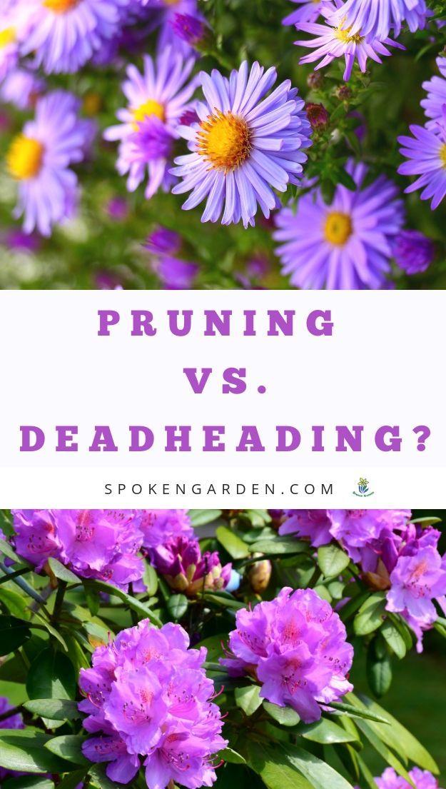 Pruning Vs Deadheading Revealed Diy Garden Minute Ep 2 Spoken Garden Pruning Plants Deadheading Flowers Plant Care