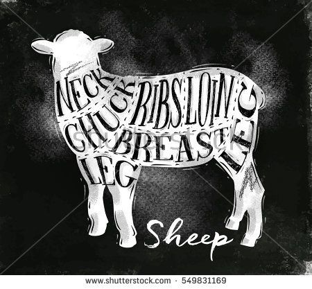Poster sheep lamb cutting scheme lettering neck, chuck, ribs, breast, loin, leg in vintage style drawing with chalk on chalkboard background