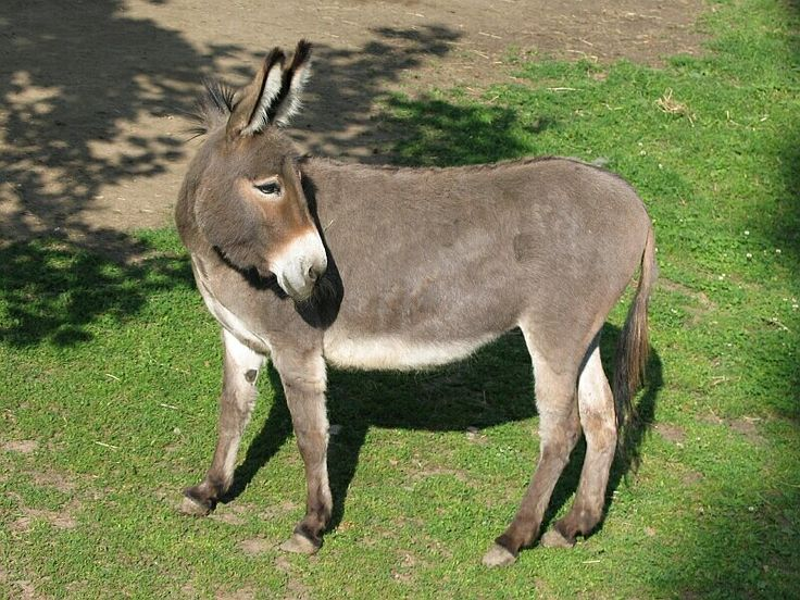 Global Federation Of Animal Sanctuaries Accredits First Donkey Sanctuary In U.S.  ... from PetsLady.com ... The FUN site for Animal Lovers