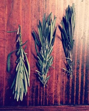 Lavender Leaves :: Ideas and Recipes | Tant Hill Farm