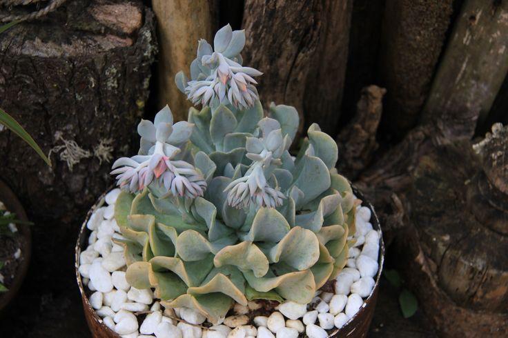 Growing Succulent by Charissa Lotter (de Scande) by Charissa Lotter (de Scande) on 500px