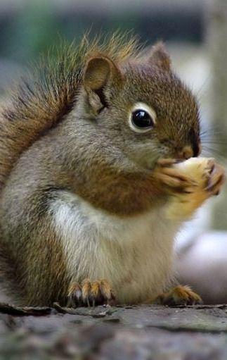 ❄baby squirrel cutie